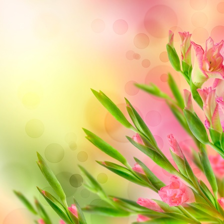 Beautiful pink Floral Border. With Flower design and copy space Stock Photo - 13269154