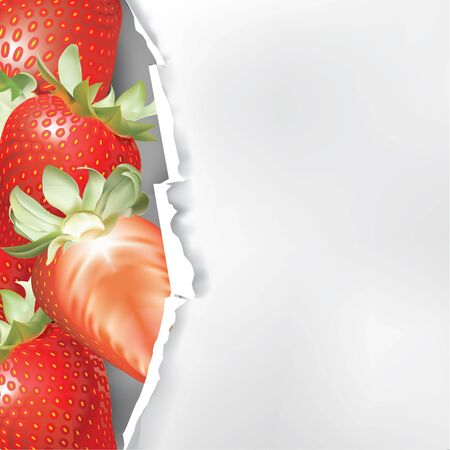 Piece of white paper with torn edge and strawberry fruit Vector