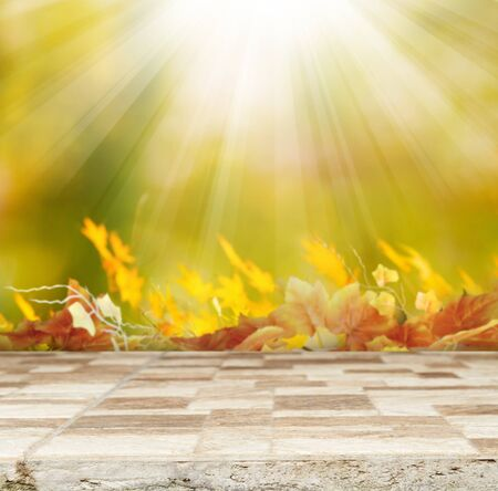 dry leaves: autumn background Stock Photo