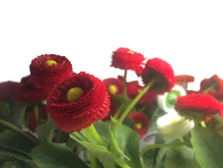 beautiful flowers: beautiful flowers isolated on white
