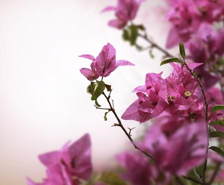 beautiful flowers: pink flower background