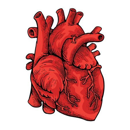 Heart illustration with engraving style
