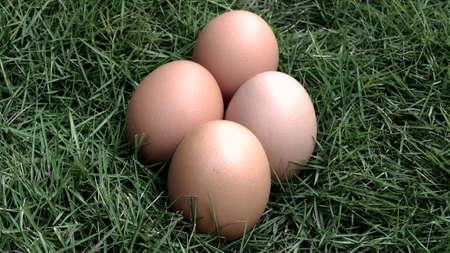 eggs in the grass nature farm fresh Archivio Fotografico