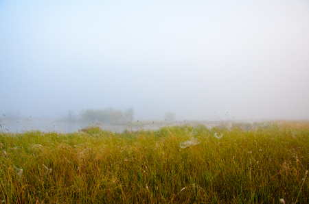 In the foreground yellow grass with drooping cobwebs in the background of lake and trees