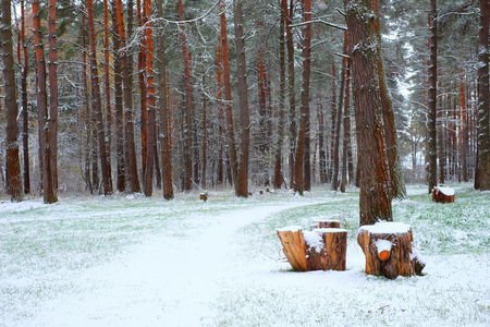 Winter wonderland in a snowy pine forest. The stump is used for rest tourists during tours.