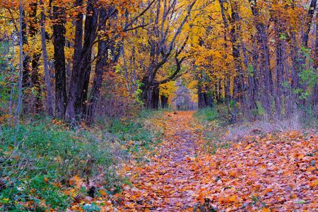 A dedicated path through the Park between the trees, strewn with leaves. Circle of colorful autumn colors.