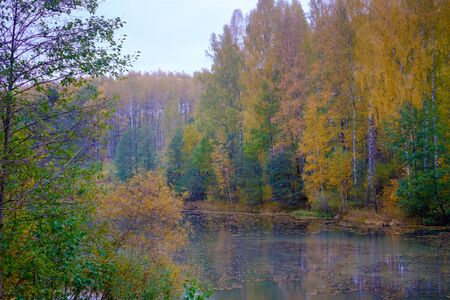 Beautiful forest landscape near the river in the fall. Colorful thick of the forest, in the forest is the river into which the leaves fell. Standard-Bild