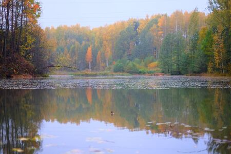 Beautiful autumn forest landscape near the river. Colorful forest reflected in the water of the river.