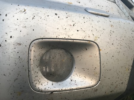 Crashed insects on gray car bumper. Crush the mosquitoes and gnats at the front of the vehicle. Stock Photo - 94851369
