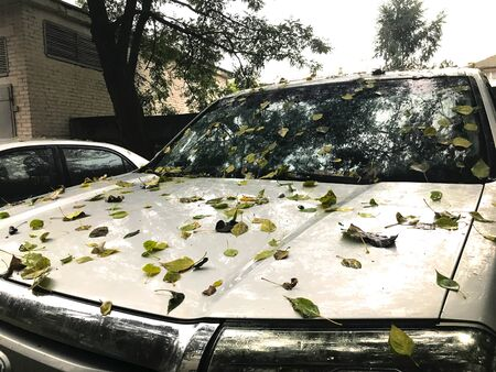 Autumn leaves on the hood of the car. Faded leaves close-up on the gray car windshield. In the background brick building, trees and overcast sky.