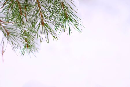 Pine branches covered with snow at the top. There's a lot of snow. Place for Your text.