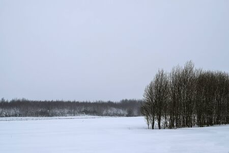 Winter landscape with a snowy forest. Winter landscape with snowy forest. In the foreground are snowy expanses and forest ridge, in the background is also a forest in the snow. Banque d'images