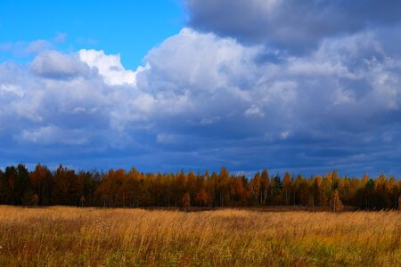 Beautiful view of the meadow in the autumn. Blue sky, meadow and forest play autumn yellow colors. In the background is a forest, in front of the yellow meadow. Banque d'images