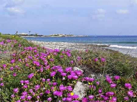 paisaje mediterraneo: Playa cerca de Santa di Gallura mediod�a con flores de color rojo (Carpobrotus), Cerde�a, Italia Foto de archivo