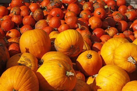 Pumpkin (Cucurbit) harvest in autumn, Germany