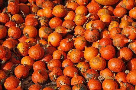 cucurbit: Pumpkin (Cucurbit) harvest in autumn, Germany