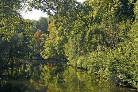 broadleaved tree: Pond with water reflection in Westphalia, Germany, Europe