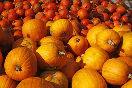 Pumpkin (Cucurbit) harvest in autumn photo