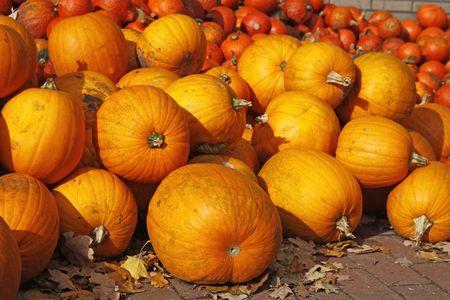 cucurbit: Pumpkin (Cucurbit) harvest in autumn