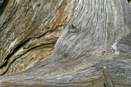 Tree stump, wood structure Stock Photo - 6857333