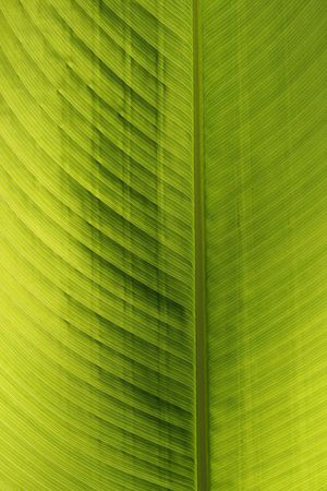Green leaf of a palm tree Stock Photo - 6857432