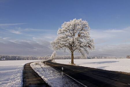 Tree with hoarfrost, Bad Laer, Osnabrueck country, Lower Saxony, Germany, germanEurope Stock Photo - 7822531