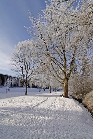 broadleaved tree: Spa park in winter - Bad Rothenfelde, Osnabruecker Land, Lower Saxony (in the background the salt-works), Germany, germanEurope Stock Photo