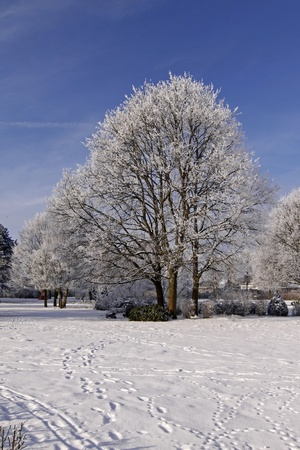 Tree with hoarfrost in winter, spa park in Bad Laer, Osnabruecker land, Lower Saxony, Germany, Europe Stock Photo - 9443456