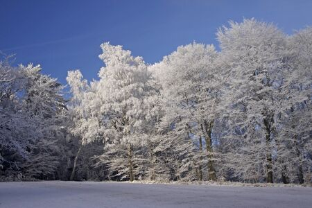 Trees with hoarfrost in winter, Georgsmarienhuette, Lower Saxony, Germany Stock Photo - 9443904