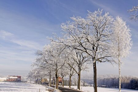 hoarfrost: Street with deciduous trees with hoarfrost in winter, Hilter-Eppendorf, Osnabruecker land, Lower Saxony, Germany, Europe Stock Photo