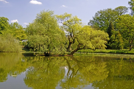 Pond landscape with willows in spring, North Rhine-Westphalia, Germany, Europe photo
