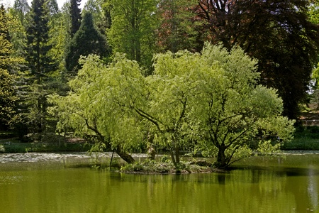 Pond landscape with willows in spring, North Rhine-Westphalia, Germany, Europe Фото со стока