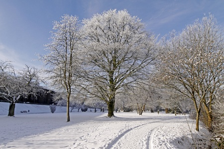 broad leaved tree: Spa park in winter - Bad Rothenfelde, Osnabruecker Land, Lower Saxony (in the background the salt-works)