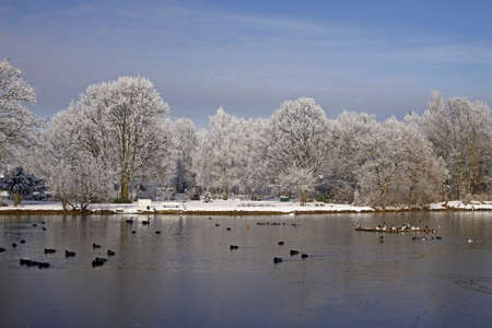 broadleaved tree: Trees with pond landscape in winter, Bad Laer, spa park, Osnabruecker Land, Lower Saxony, Germany, Europe