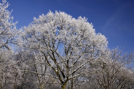 흰 서리: Trees with hoarfrost in winter, Lower Saxony, Germany, Europe 스톡 사진