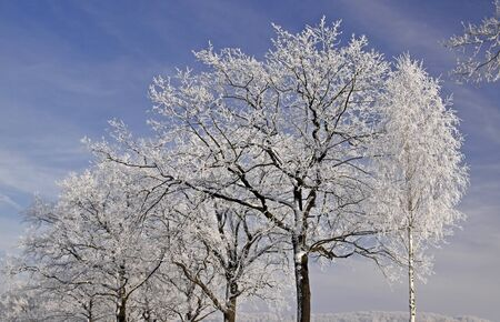 hoarfrost: Trees with hoarfrost in winter, Lower Saxony, Germany, Europe Stock Photo