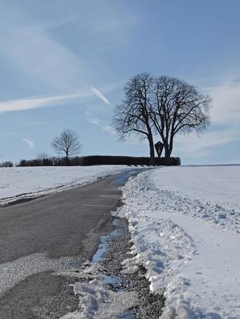 Chestnut in winter (Aesculus hippocastanum), Bad Iburg-Glane, Osnabruecker Land, Lower Saxony, Germany Stock Photo - 12002968