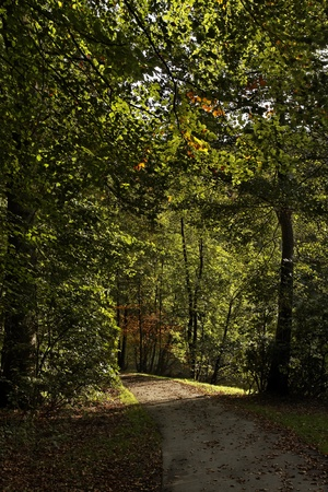 int: Bad Iburg, beech forest int the spa park in autumn, Lower Saxony, Germany, Europe