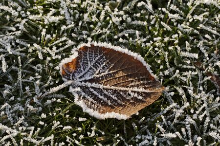Frost-covered leaf in November photo