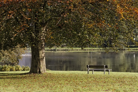 broad leaved tree: Bad Iburg, autumn at the Charlottensee, Lower Saxony, Germany, Europe Stock Photo