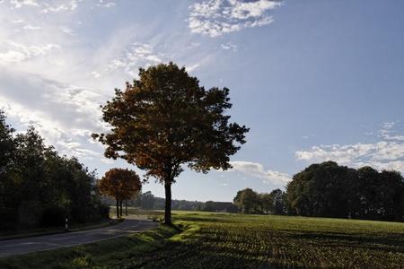 broadleaved tree: Country road in autumn, Georgsmarienhuette, Lower Saxony, Germany, Europe