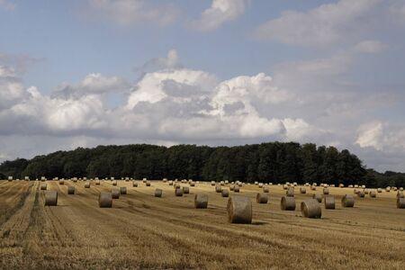 feld: Round baler, straw bale in Lower Saxony, Germany, Europe mit Strohballen, Rundballen auf einem Feld in Niedersachsen - Ostercappeln, round baler, straw bale in Lower Saxony, Germany, Europe Stock Photo