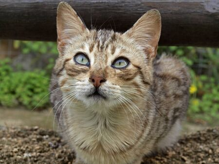 housecat: Young domestic cat  Felis silvestris catus , housecat Stock Photo