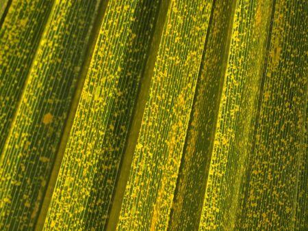 nervure: Leaf of a palm tree