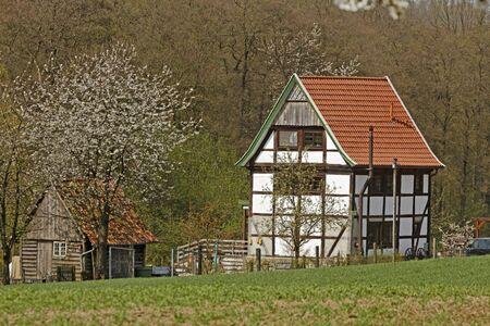 Фахверковые дома с вишни в апреле в Holperdorp, Северный Рейн-Вестфалия, Германия