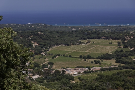 View from Ramatuelle at the landscape near Saint-Tropez, Cote d Azur, Cote dAzur, French Riviera, Provence, Southern France, Europe photo
