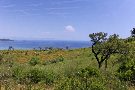 d'azur: Cap Camarat, Ramatuelle, landscape with old trees, French Riviera, Southern France, Europe Stock Photo