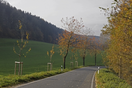 road autumnal: Orange, country road, highway, road, Street, landscape, fall, autumnal, Autumn, autumnal colouring, fall foliage, Leaves colouring, Broad-leafed tree, Deciduous tree, tree, Forest, Deciduous forest, Deciduous, trees, European, Europe, german, Germany, Hol