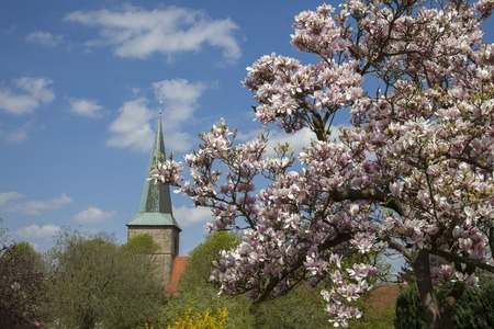 broad leaved tree: Evangelical St. Laurentius church in Schledehausen, Osnabrueck country, Lower Saxony, Germany (Protestant church)