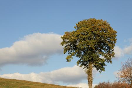 saxony: Deciduous tree in autumn, Lower Saxony, Germany